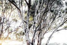 Australian Countryside / A beautiful illustration of the stunning Australian countryside