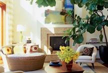plants/flowers/yard/porch etc. / by Terri Thames