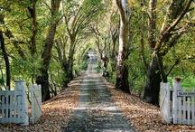 pathways that invite me / by Terri Thames