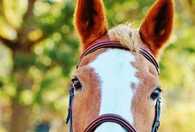 Horses  / by Sara Kjeldsen