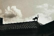 """The Cat Inside / """" Somos os gatos por dentro. Os gatos que não podem andar sozinhos, e para nós há apenas um lugar."""" -William Burroughs"""