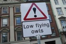 animals: owls / by Martha Gill