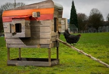 chicken coups / I want chickens in my life... here are some dream coops! #chicken #coop #urbanfarming