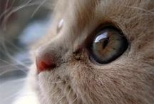 """Cats,Gattini,Gatitos,Chatons / """"Time spent with cats is never wasted"""" Sigmund Freud"""
