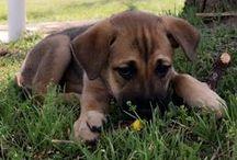 Mia / It's A Dog's Life!