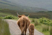 ✘ Schottland Reisetipps ✘ / Schottland, Highlands, Reiserouten, Informationen, Rundreise, Travel, Mietwagen, Burgen, Pubs, Eilean Donan Castle, Edinburgh, Isle of Skye, Äußere Hebriden, GeoMarian