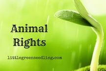 Animal Rights / Articles discussing the ethical issues behind our exploitation of animals - from a vegan perspective