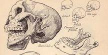 Anatomia / Ecco l' affascinante mondo all' interno del nostro corpo e quello di altri animali.