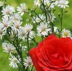 1000+ Hình Ảnh Hoa Đẹp Ngày 8/3, Những Bó Hoa Đẹp Nhất Dành Cho Ngày Quốc Tế Phụ Nữ / Có thể nói với Bộ sưu tập hình ảnh hoa hồng đẹp nhất 8/3 sau đây là sự chắt lọc từ những bức ảnh hoa đẹp nhất trên toàn thế giới mà chúng tôi đã sưu tầm với mong muốn đem lại niềm hạnh phúc nhỏ cho ngày Phụ Nữ Việt Nam.