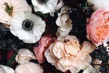 Flower / Blumen