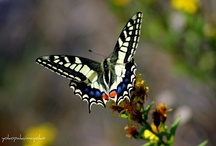 Things about a BUTTERFLY / Any thing about a butterfly ... info, what its made of , pictures etc.