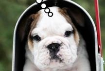 Mail + Animals = Cuteness Overload