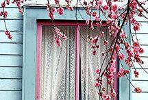 Windows, Shutters and Doors