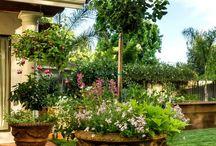 gardening / by Beth Auer Vollmer