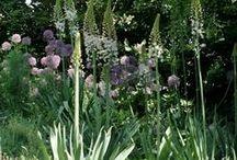 Perennial Gardens / Plant groupings in Edenpont gardens