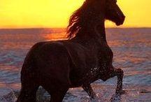 Koně - Horses