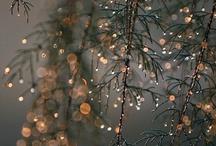 Christmas / by Crystal Sadler