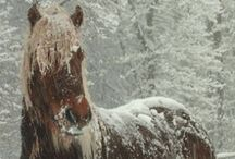 Horses / by Linda Myers