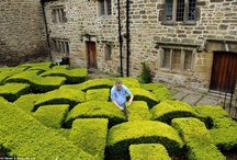 topiary, trees, living sculpture