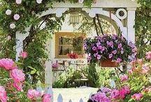 My Secret Garden / by Shelia Scherer