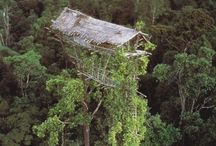 treehouses / by Linda Myers