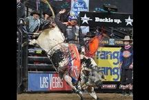 PBR/ Bull Riding