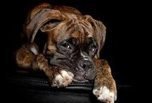Boxers / by Clevell Koon