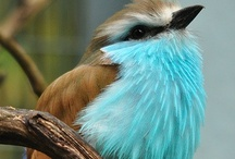 I LOVE birds!