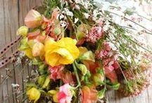 flowers / by Kim van Renswouw
