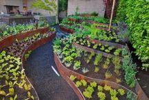 Gardening / by Colleen Clark