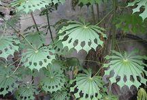 Favorite Plants to Grow / Heuchera