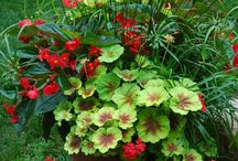 Outdoor garden planter / Beautiful plant combinations in containers for all seasons.