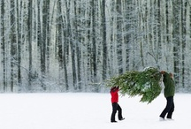 Winter - Images / winter photos