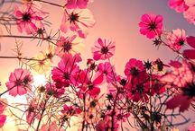 Blush. / by Mindyy Murphy