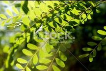 Greenness / GREEN... the colour of springtime, growth, fertility, nature, youth, hope and envy... STOCK PHOTOS HERE..