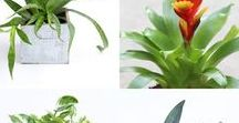 Plants That Purify Air / Did you know that indoor plants can purify your air at home? This is perfect for gardeners and green thumbs alike. Get clean air, naturally.  Using Plants to Purify Air at Home