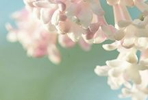 Garden and Nature / Garden and Nature / by Deux Brins de Maille | Knitting Designer