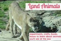 Land Animals / hands on science activities to learn about land animals using Apologia science homeschooling / by Ticia Adventures in Mommydom