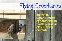 Flying creatures / hands on activities to learn about Flying creatures, experiments, lessons and more for your classroom or homeschool for Apologia / by Ticia Adventures in Mommydom
