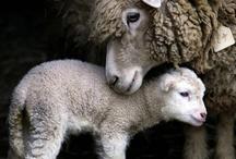 Animal Mom & kid / by Joan Silkartist