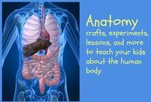anatomy / Anatomy lessons for kids, anatomy crafts and books for kids / by Ticia Adventures in Mommydom