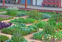 garden and growing