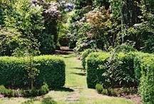 Gardens / by Giulia H.
