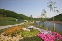 High1 Landscape ; Spring