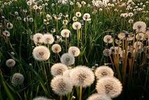 Wildflowers / by Ashley Warner