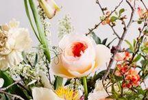Floral / by Kate Bergmann
