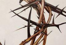 ch | spines : wren