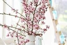 spring / by Megan England