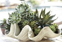 Plants in Pots / by Cecelia DesPortes