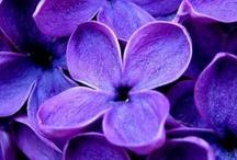 purple hues... / by Eleni Galanis